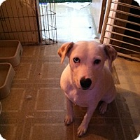 Adopt A Pet :: PRINCESS - Tonopah, AZ