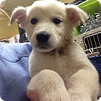 Adopt A Pet :: Yogi - BIRMINGHAM, AL