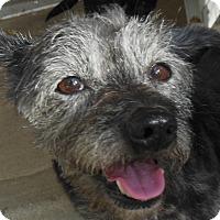 Adopt A Pet :: Trixie - MINNEAPOLIS, KS