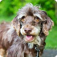 Adopt A Pet :: Doza - Pittsburgh, PA