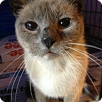 Adopt A Pet :: lulu - Glen cove, NY