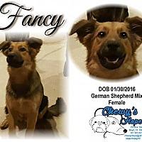 Adopt A Pet :: Fancy - Boyd, TX