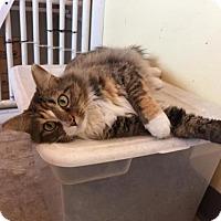 Adopt A Pet :: Layla - Erwin, TN