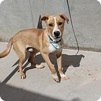 Adopt A Pet :: A14 EMERSON - Odessa, TX