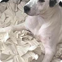 Adopt A Pet :: Faith - St Paul, MN