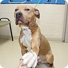 Adopt A Pet :: 23188 - Lance