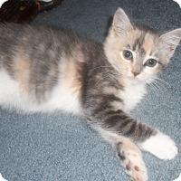 Adopt A Pet :: patience - brewerton, NY