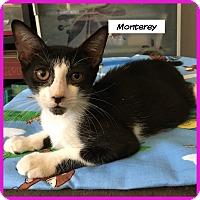 Adopt A Pet :: Monterey - Miami, FL