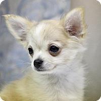 Adopt A Pet :: COURTESY POST - Corbin - Picayune, MS