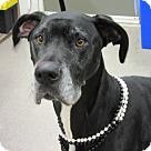 Adopt A Pet :: Bella