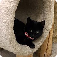 Adopt A Pet :: Coal - Warren, OH