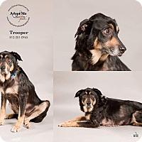Adopt A Pet :: Trooper - Terre Haute, IN