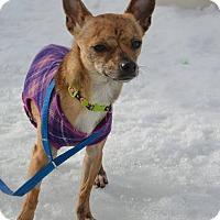 Adopt A Pet :: BayBay - Meridian, ID