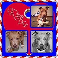 Adopt A Pet :: Tazar - Louisiana, MO