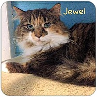 Adopt A Pet :: Jewel - Huntington, NY
