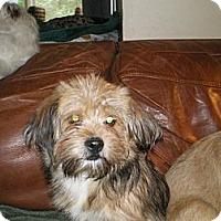 Adopt A Pet :: Kree - Apex, NC