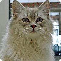 Adopt A Pet :: Ninja - Cheyenne, WY