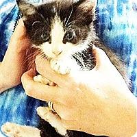 Adopt A Pet :: Jamie - Xenia, OH