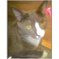 Adopt A Pet :: Tavi - Owasso, OK