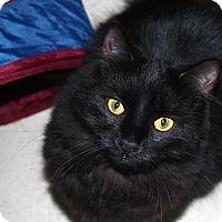 Adopt A Pet :: Amy - North Branford, CT