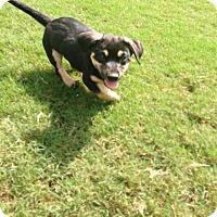 Adopt A Pet :: Fritz - Byhalia, MS