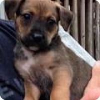Adopt A Pet :: Baby Cody - Marlton, NJ