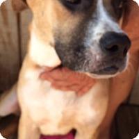 Adopt A Pet :: Zeus Adoption pending - Manchester, CT