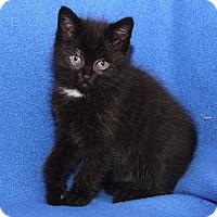 Adopt A Pet :: Janet - Marietta, OH
