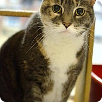 Adopt A Pet :: Emma - Waiting over 1 year - Herndon, VA