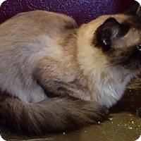 Adopt A Pet :: Mister - Ennis, TX