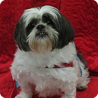 Adopt A Pet :: RALPHIE - Eden Prairie, MN