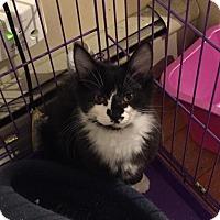 Adopt A Pet :: Echo - Wakefield, MA