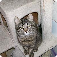 Adopt A Pet :: Maysie - Scottsdale, AZ