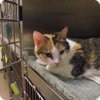 Adopt A Pet :: Puppet - Chambersburg, PA