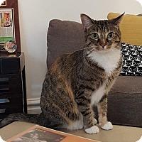 Adopt A Pet :: Rosa - St. Louis, MO