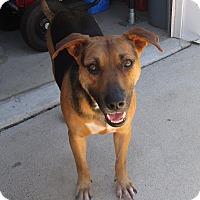 Adopt A Pet :: Puddin - New Oxford, PA