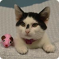 Adopt A Pet :: Valerian - Cincinnati, OH