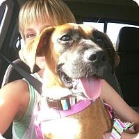 Adopt A Pet :: Ariel - Hedgesville, WV