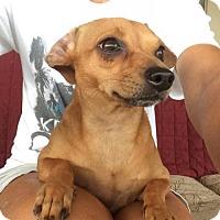 Adopt A Pet :: Lil Bit - Abbeville, LA
