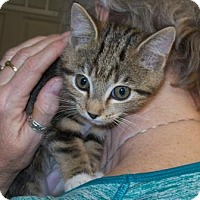 Adopt A Pet :: Whisper - Picayune, MS