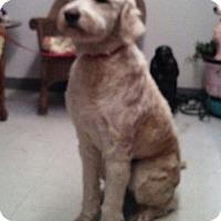 Adopt A Pet :: Tucker - Tulsa, OK