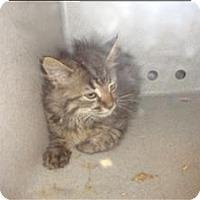 Adopt A Pet :: Pet Photo - Raleigh, NC