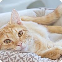 Adopt A Pet :: Jeffrey - St Louis, MO