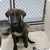 Adopt A Pet :: A02 Elle - Odessa, TX