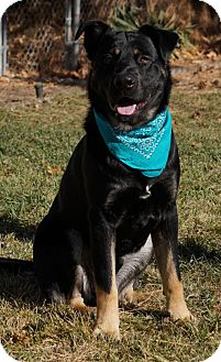 Shepherd (Unknown Type)/Rottweiler Mix Dog for adoption in Salt Lake City, Utah - Stealth