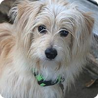 Adopt A Pet :: Travis - Woonsocket, RI
