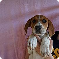 Adopt A Pet :: Mattie - Oviedo, FL