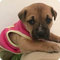 Adopt A Pet :: Ashley - Gallatin, TN