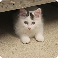 Adopt A Pet :: Lucky - Naperville, IL