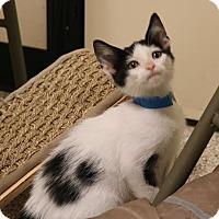 Adopt A Pet :: John - Georgetown, TX